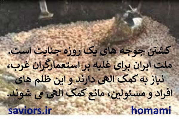 کشتن جوجه های یک روزه توسط افراد، مانع رحمت خداوند بر ملت می شود